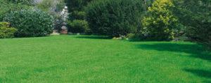 Machen Sie Ihren Rasen frühlingsfit!